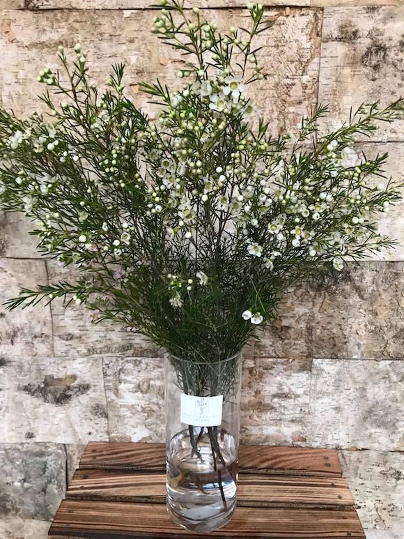 Wax do vázané květiny Brno