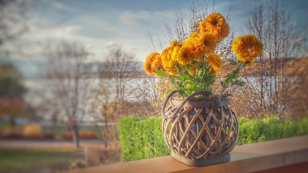 Terasa/balkon s chryzantémami