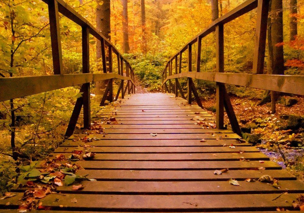 Procházka - podzimní sběr v okolí Brna