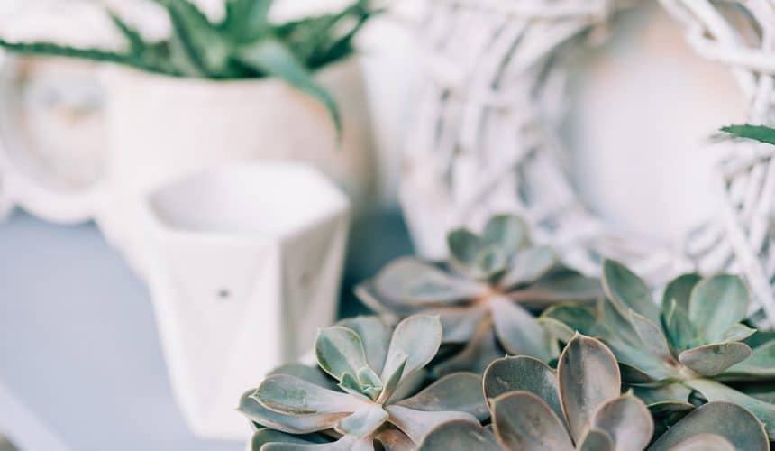 Rostlinky v keramických květináčích