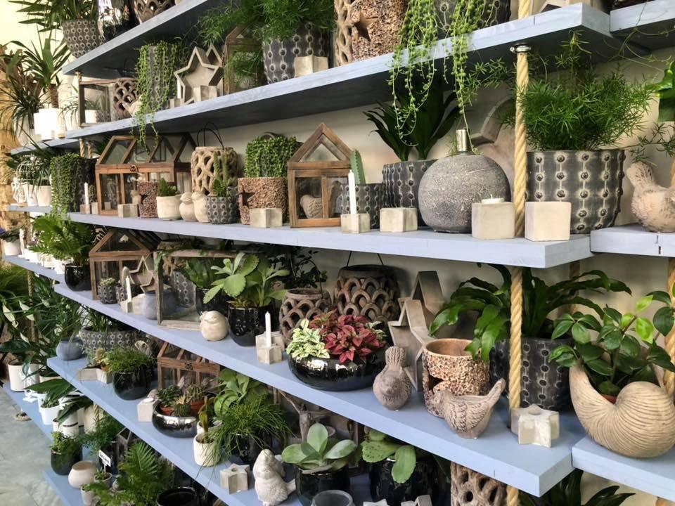Vystavené pokojovky v keramických květináčích - vhodné ke koupi i v zimních měsících