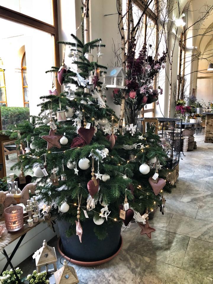 Opravdové žívé vánoční stromečky v interieru Květinářství GALERIE Brno