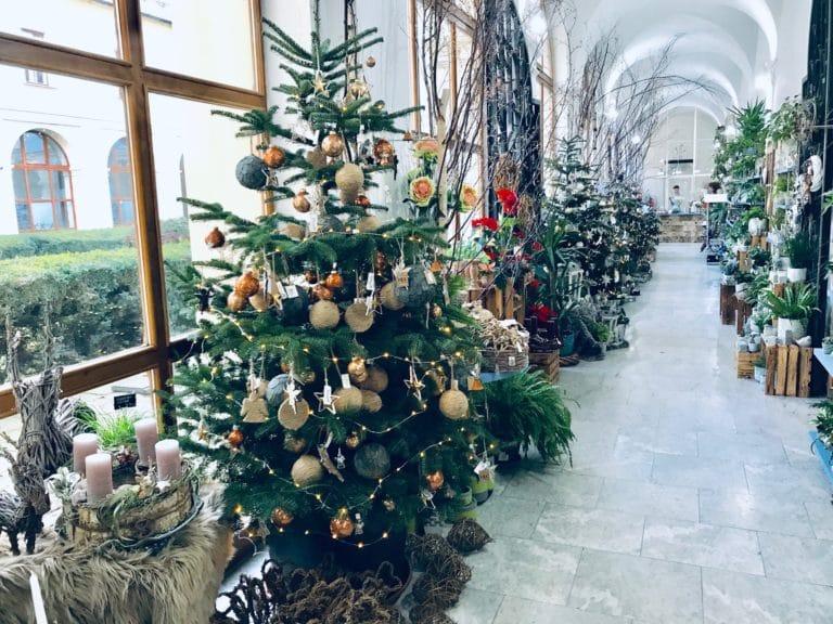 Vánoční stromečky v brněnském Květinářství GALERIE