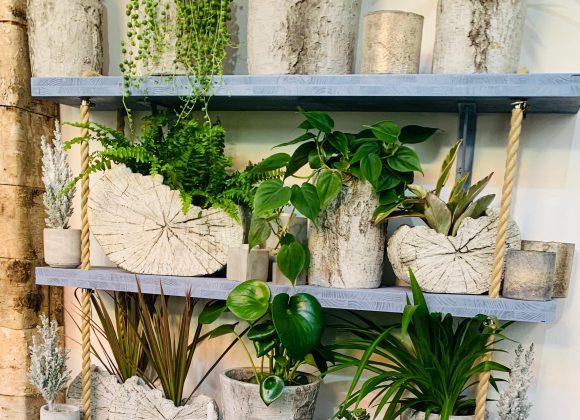 Nebojte se darovat hrnkové rostliny