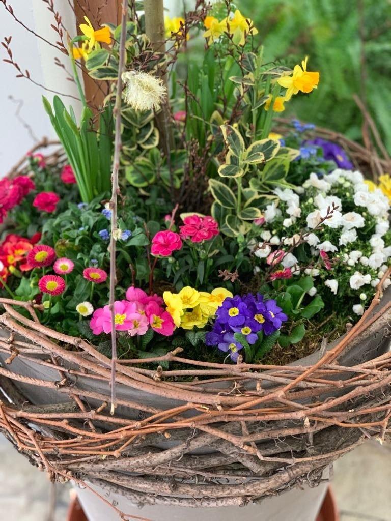 Jarní květiny ve velkém květináči před vstupem do Květinářství GALERIE Brno