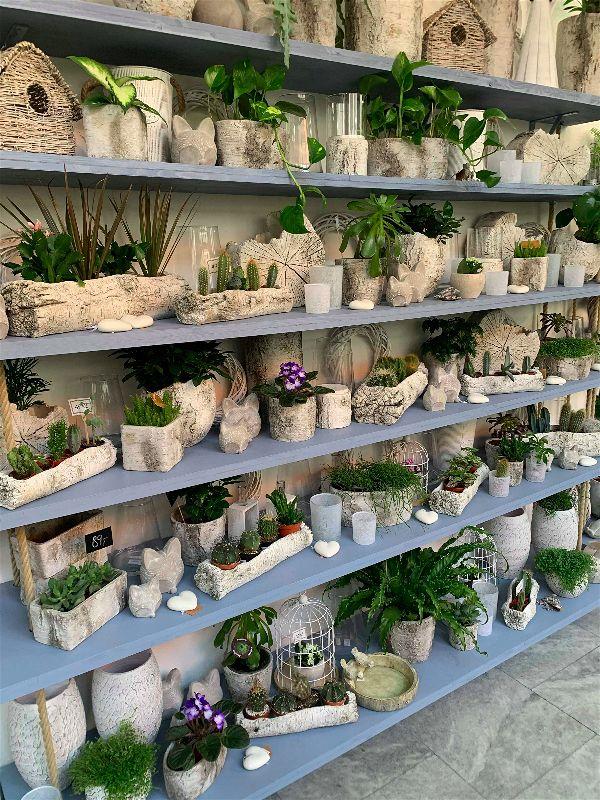 Velký výběr pokojovek v designových obalech ve Květinářství GALERIE Brno