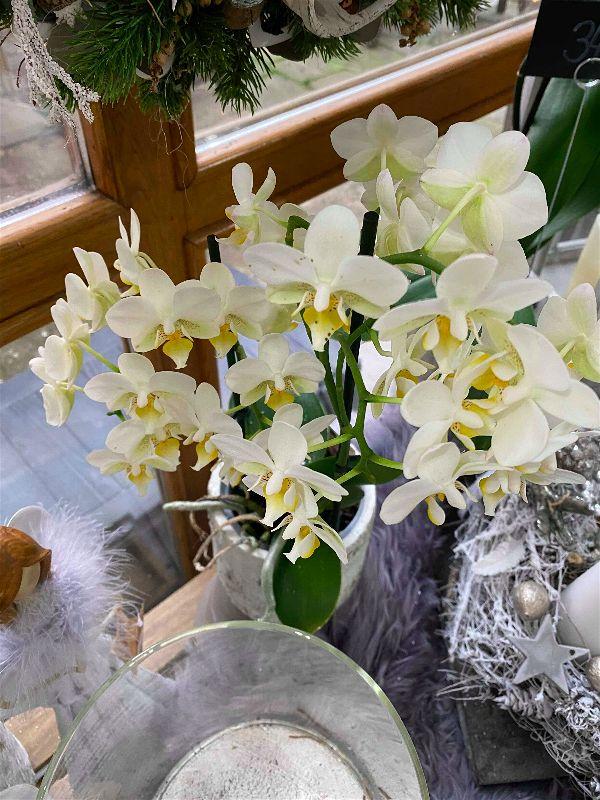 Orchidey kvete i v zimě