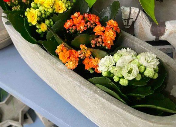 Květiny kvetoucí vzimě zkrášlí každý interiér