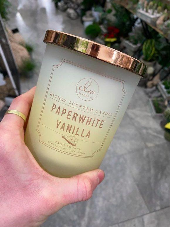 DW Home - Paperwhite Vanilla