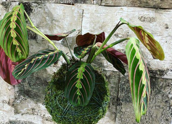 Kokedamy – levitující rostliny vjaponském stylu